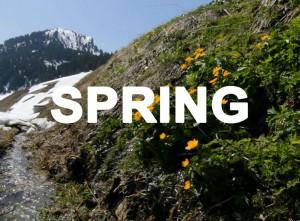 Spring Final